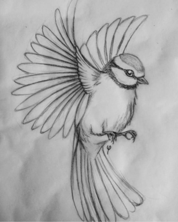 85 Simple And Easy Pencil Drawings Of Animals For Every Beginner