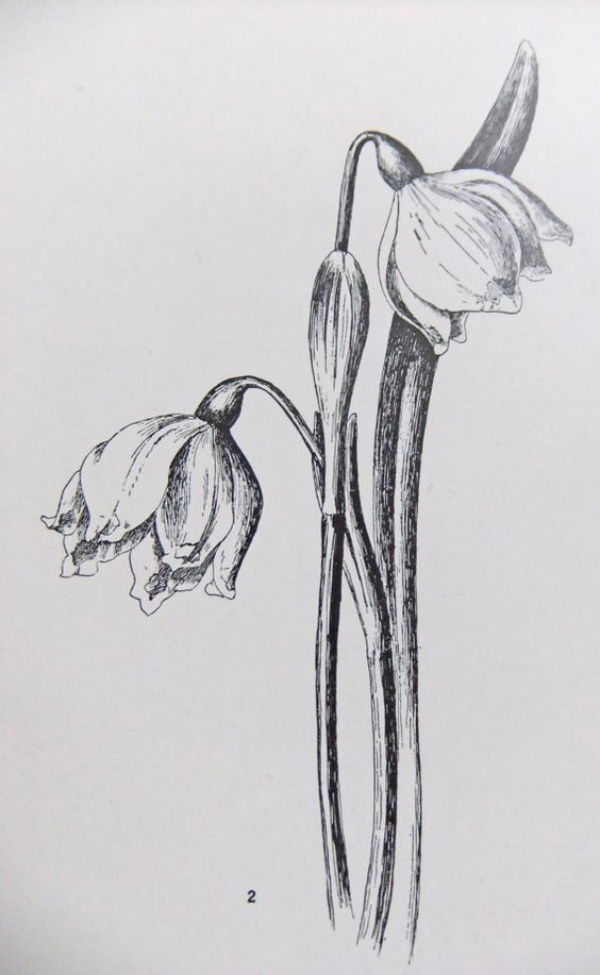 35 Easy Pencil Drawings Of Flowers For Inspiration Buzz Hippy